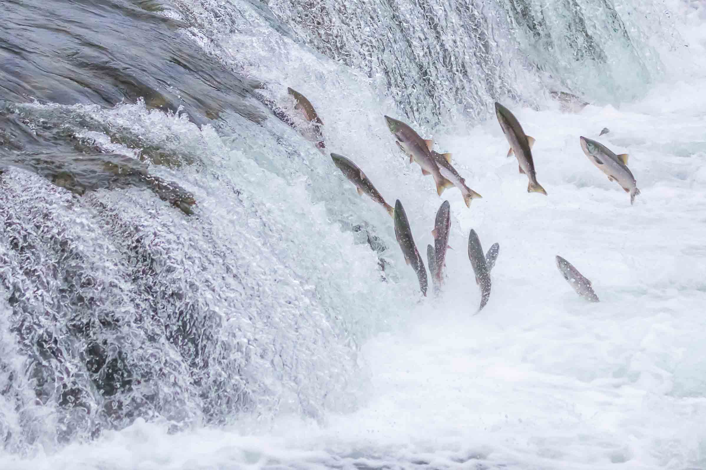 salmon_waterfall
