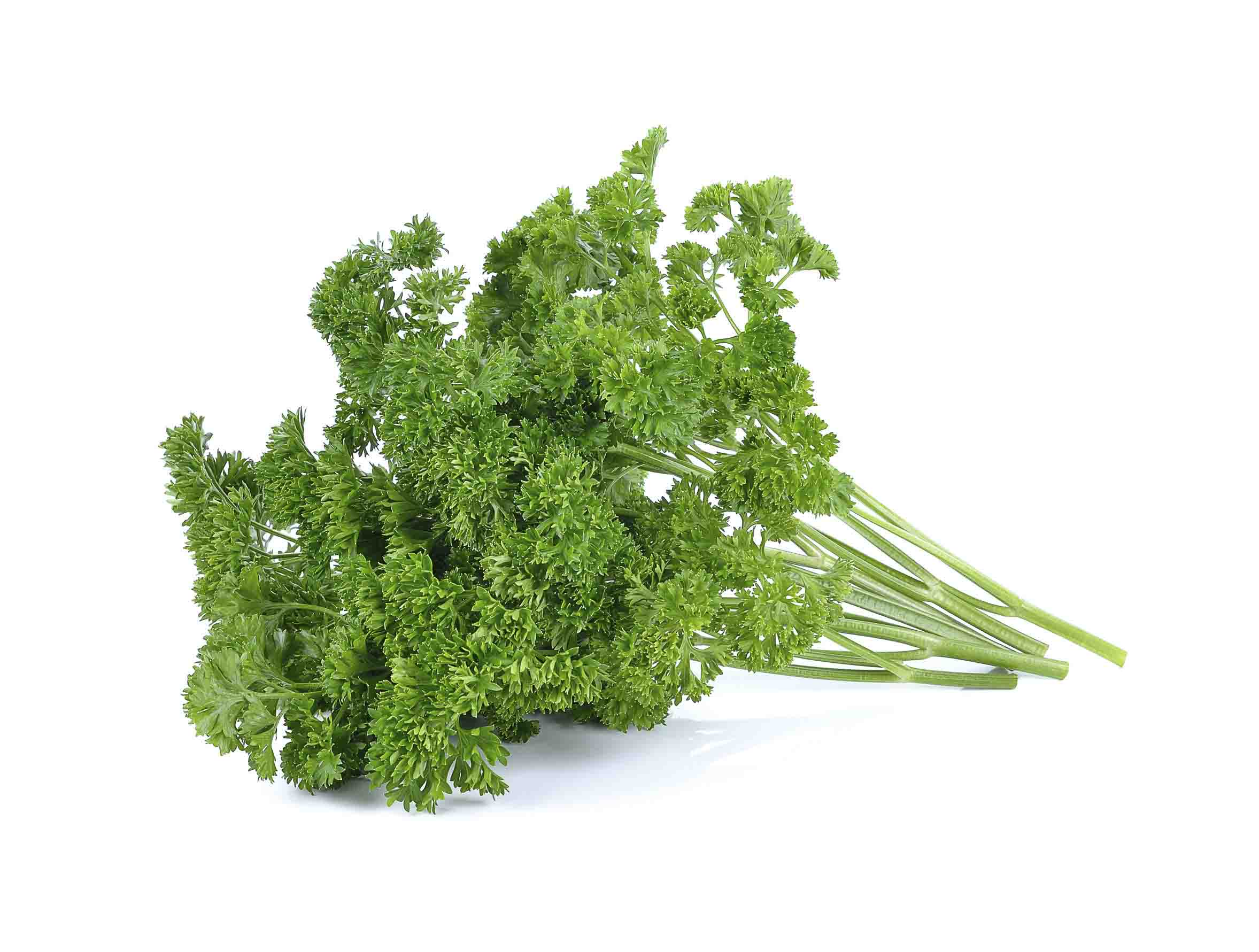 Parsley_Pic
